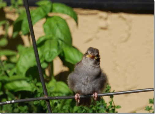 baby bird saturday1